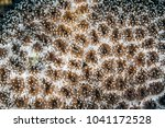 sea anemones are a group of... | Shutterstock . vector #1041172528