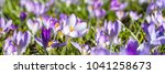 Banner Format With Spring...