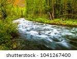 Forest Wild River Flow Landscape