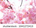 japanese cherry blossoms | Shutterstock . vector #1041272413