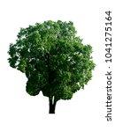tree isolated on white...   Shutterstock . vector #1041275164