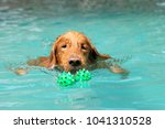 the dog swimming in pool.dog... | Shutterstock . vector #1041310528