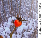 berry of a dogrose in a winter... | Shutterstock . vector #1041319036