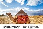 camel at giza pyramids | Shutterstock . vector #1041404989