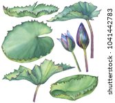 set with indian lotus leaves.... | Shutterstock . vector #1041442783