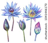 set with flowers blue egyptian...   Shutterstock . vector #1041446170