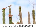 Bird On Top Of Cactus With Pin...