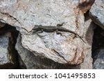 lizard is basking in the stone... | Shutterstock . vector #1041495853