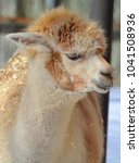 alpaca is a domesticated... | Shutterstock . vector #1041508936