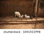white goats family standing... | Shutterstock . vector #1041521998