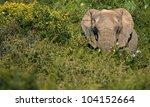 Постер, плакат: A big elephant bull