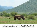 white rhino in kruger national... | Shutterstock . vector #1041556018