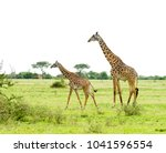 closeup of masai giraffe ... | Shutterstock . vector #1041596554