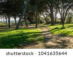 beautiful forest near the sea... | Shutterstock . vector #1041635644