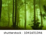 forest with fog on mountain ... | Shutterstock . vector #1041651346