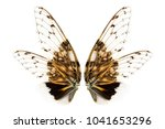 wings of insect  cicada ... | Shutterstock . vector #1041653296