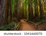 Muir Woods National Monument....