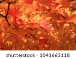maple leaf. maple tree with... | Shutterstock . vector #1041663118