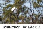 flying great egret bird ardea...   Shutterstock . vector #1041686410
