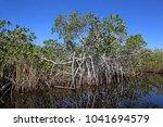 the mangroves of florida... | Shutterstock . vector #1041694579