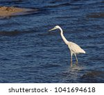 a great egret  ardea alba ...   Shutterstock . vector #1041694618