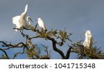 the great egret in breeding... | Shutterstock . vector #1041715348