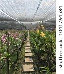 Walkway In Orchid Farm ...