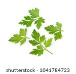 parsley herb isolated on white... | Shutterstock . vector #1041784723
