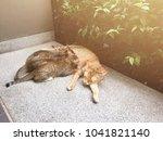 animal composition. kittens are ... | Shutterstock . vector #1041821140