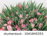 huge bouquet of many fresh pink ... | Shutterstock . vector #1041845353