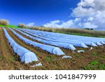 a typical agriculture... | Shutterstock . vector #1041847999