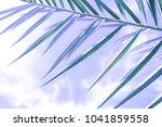 beautiful palm tree on the sea... | Shutterstock . vector #1041859558