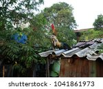 rooster stand on zinc roof. | Shutterstock . vector #1041861973