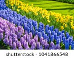 blooming hyacinth and narcissus ... | Shutterstock . vector #1041866548