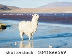 white alpaca on the shore of... | Shutterstock . vector #1041866569