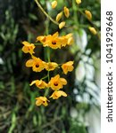 Small photo of Orchid inflorescence yellow