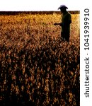 Small photo of Mato Grosso, Brazil, March 01, 2008. Silhouette of an agronomist analyzing plants in a soybean crop in Brazil