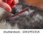 grooming undercoat dogs. comb... | Shutterstock . vector #1041951514