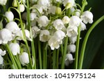 lily of the valley flowers... | Shutterstock . vector #1041975124
