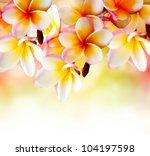 frangipani tropical spa flower. ... | Shutterstock . vector #104197598