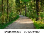 Hiking path in a beautiful sunny forest