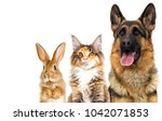 Stock photo cat and dog looking on a white background isolated 1042071853