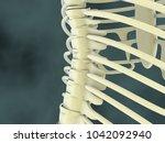 3d illustration human vertebral ... | Shutterstock . vector #1042092940