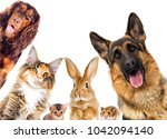 Stock photo group of animals looking on a white background isolated 1042094140