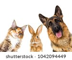 Stock photo group of animals looking on a white background isolated 1042094449