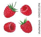 set of raspberries  watercolor... | Shutterstock . vector #1042101196