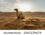 Small photo of Sitting camel in Wahabi Sands Desert, Oman. Silhouette shooting style with mountain background. Copy space on the right hand side.