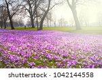 crocus flowers in the... | Shutterstock . vector #1042144558