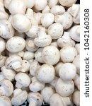 champignon harvest. white... | Shutterstock . vector #1042160308