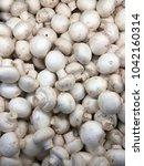 champignon harvest. white... | Shutterstock . vector #1042160314